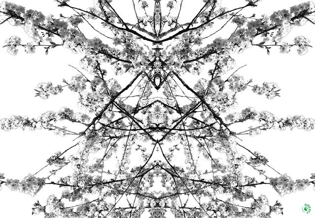 , 'Rorschach,' 2016, SHIM Art Network