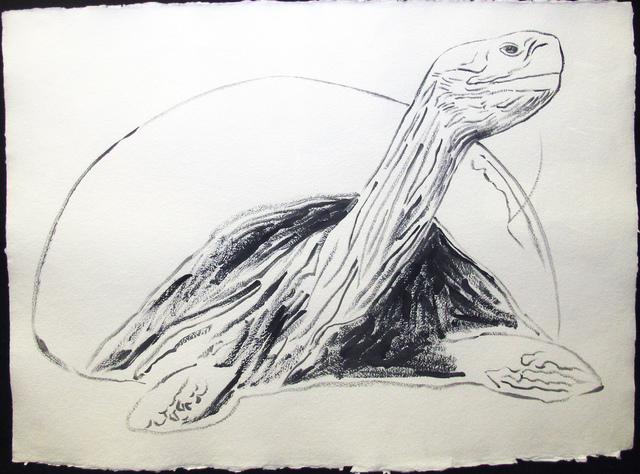 , 'Vanishing Animals -- Galapagos Tortoise,' 19867, Hamilton-Selway Fine Art
