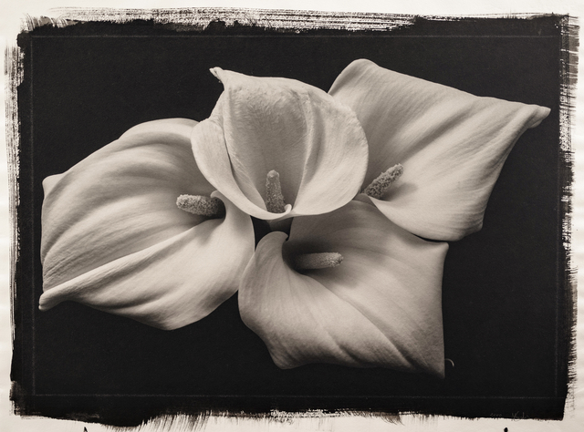 , 'Still Life 181,' 1992, Photography West Gallery