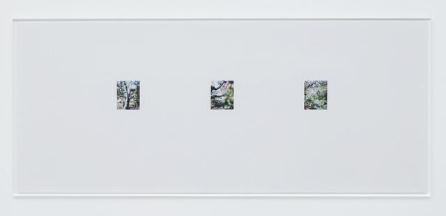 , 'Apple Tree 9,' 2017, Tomio Koyama Gallery
