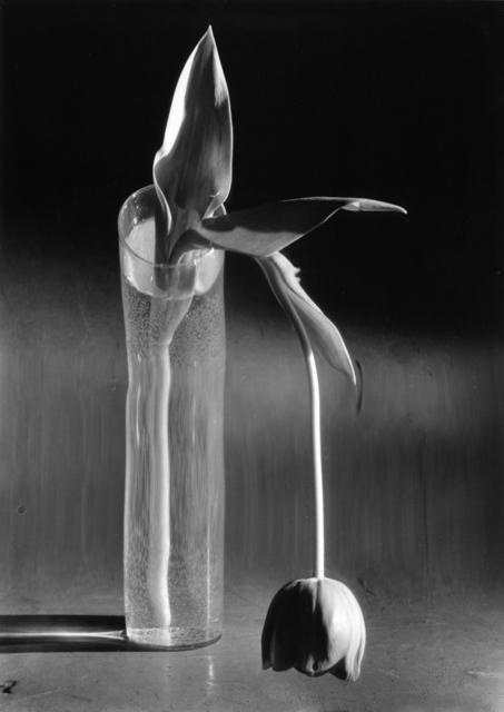 , 'Melancholic Tulip,' 1939, Bruce Silverstein Gallery