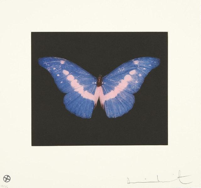 , 'To Belong, Butterfly Landscape,' 2014, Lawrence Alkin Gallery