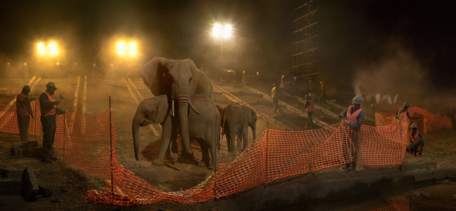 , 'Highway Construction with Elephants, Workers, and Fence,' 2018, Fahey/Klein Gallery
