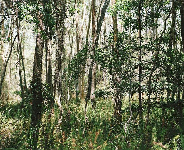 , 'Bush Landscape #3,' , OLSEN GALLERY