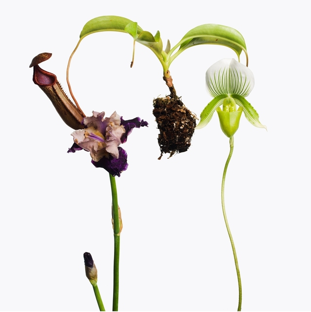 , '1 Pitcher Plant, 1 Purple Iris, 1 Lady Slipper Orchid,' 2013, Gagosian