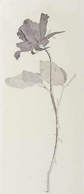 David Hockney, 'The Rose And The Rose Stalk', 1969, Rago/Wright