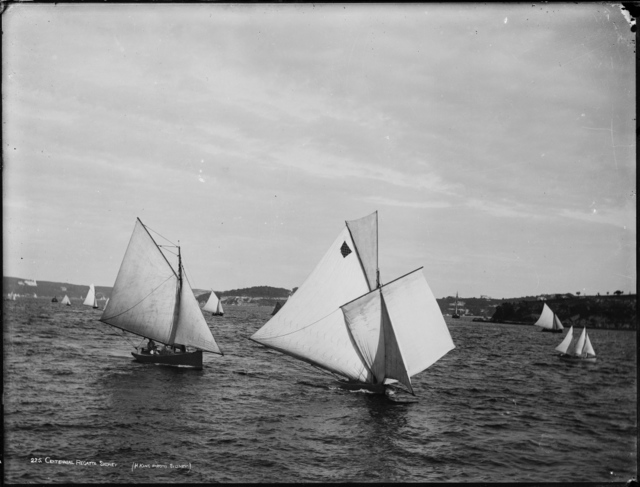 Henry King, 'Centennial Regatta, Sydney Harbour', 1888, Powerhouse Museum