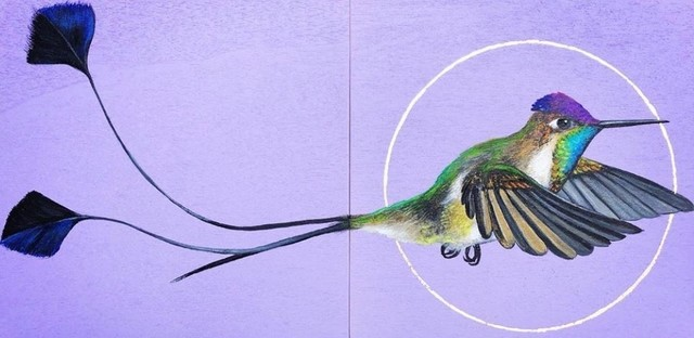 Louise McNaught, 'The Marvellous Spatuletail (Loddigesia mirabilis)', 2019, The Royal Overseas League