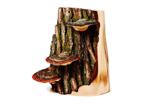 ", 'Botanical sculpture ""Yamanashi polypore x Copper"" ,' 2016, Chamber"