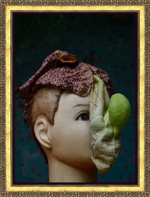 , 'Aristolochia pdnc,' 2014, Celma Albuquerque Galeria de Arte