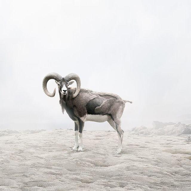 , 'Reflecting Ram ,' 2019, The Directed Art Modern
