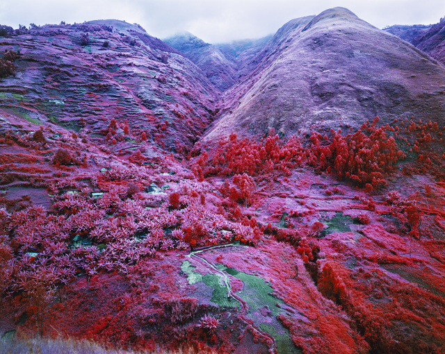 Richard Mosse, 'Non-Alignment Pact', 2015, Jack Shainman Gallery