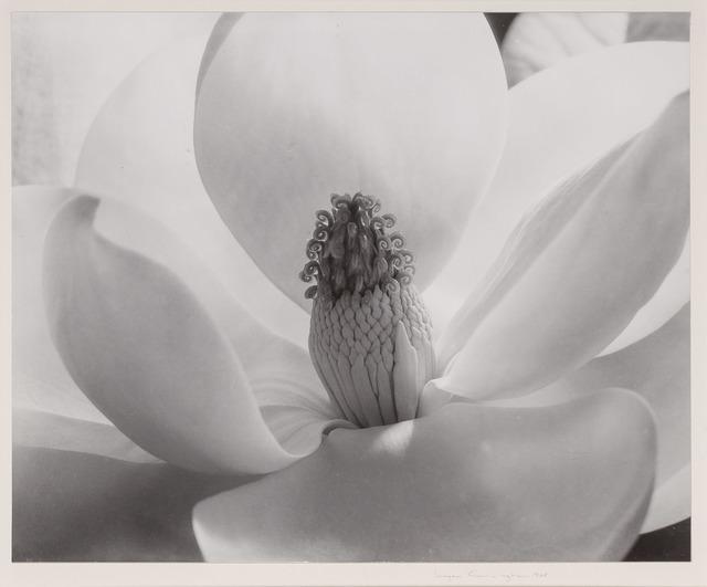 Imogen Cunningham, 'Magnolia Blossom', 1925, Doyle