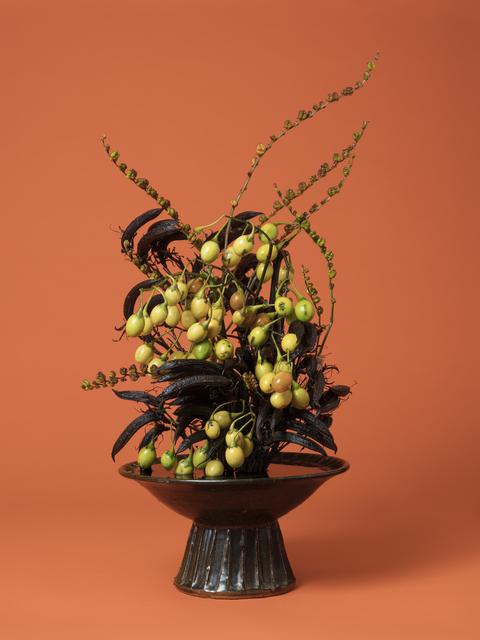 , 'The Courtesan, Poroporo (Solanum sp.),' 2015-ongoing, Denny Dimin Gallery