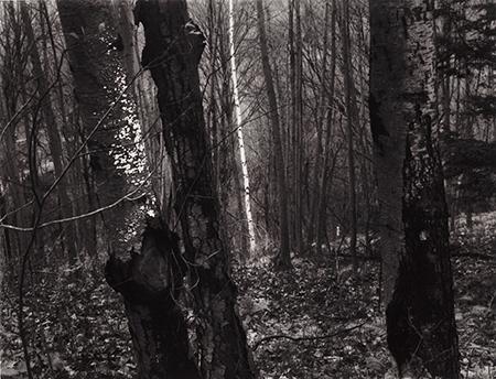 , 'Brewster, NY,' 1963, Pucker Gallery