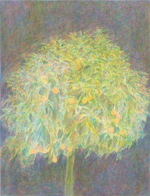 , 'Orange tree,' 2010, Taymour Grahne Gallery