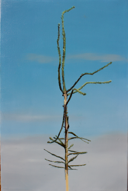, 'Picea abies #9,' 2019, Whitehouse Gallery