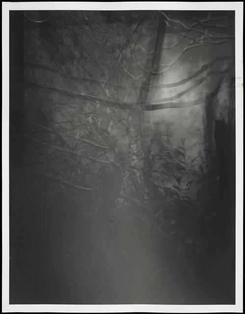, 'Botanical Garden/Bronx Zoo XIII,' 2015, Galleri Bo Bjerggaard
