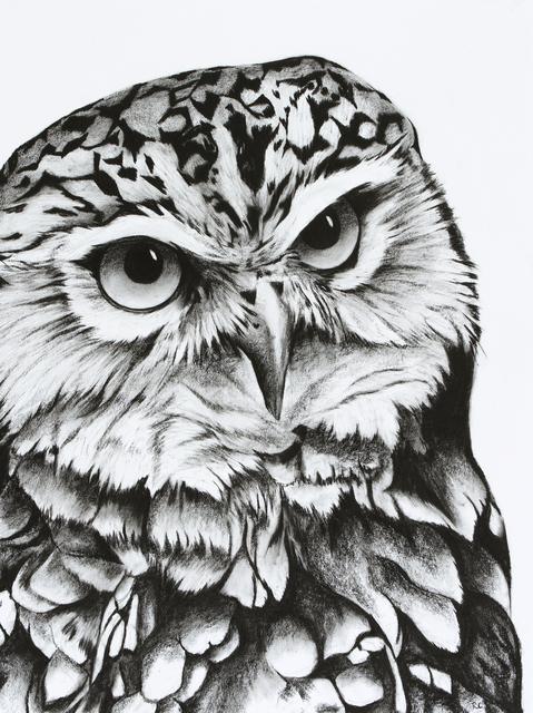 , '4. Burrowing Owl,' 2018, Sladmore Contemporary