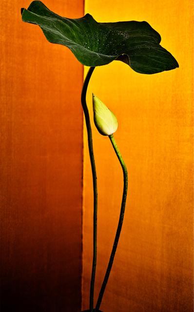 , 'golden light 22,' 2017, Galerie Marie-Robin