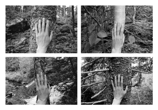 , '4 excerpts from 'Larch, Spruce, Fir, Birch, Hand, Blast Hole Pond Road, Newfoundland',' 2008, Paul Petro Contemporary Art