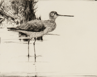 Yellowlegs No. 4