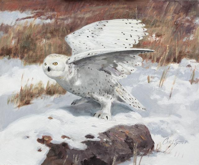 , 'Winter Ghost - Snowy Owl,' , Trailside Galleries