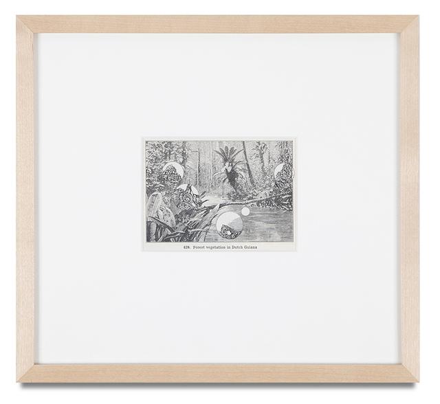 , '(FOREST VEGETATION IN DUTCH GUIANA),' 1995, Kohn Gallery