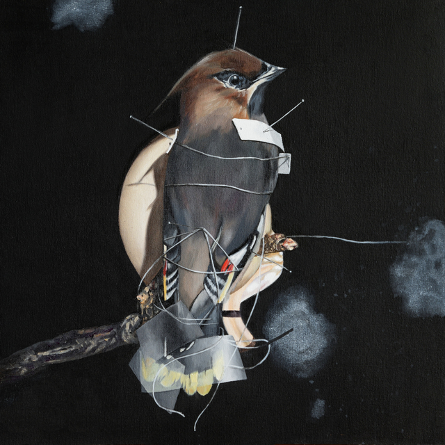 , ' Bohemian Waxwing,' 2017, heliumcowboy