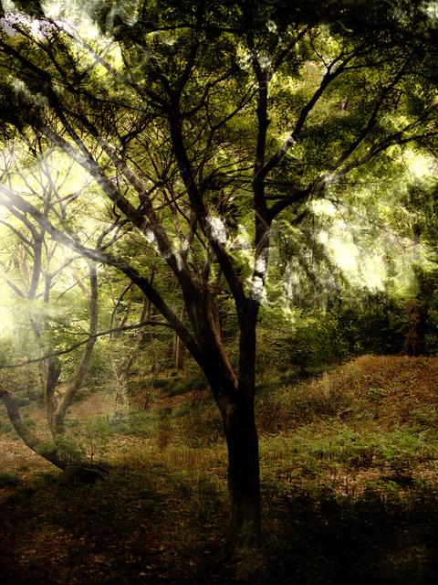 Yasuo Kiyonaga, 'Fairy of the forest 16', 2010, Photo Gallery Artisan