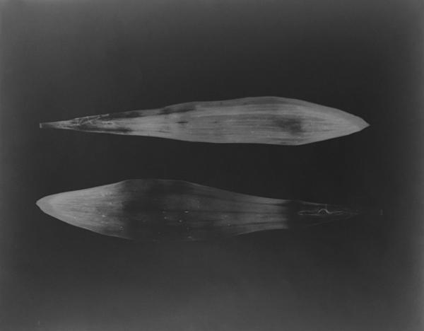 , 'Fishes Fishy,' 1992, Robert Mann Gallery