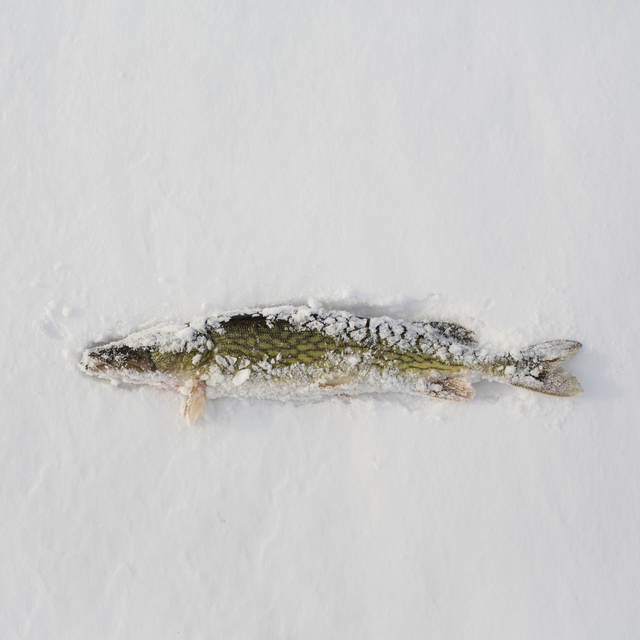 , 'Ice Shanties,' 2016-2017, ARTBAENA