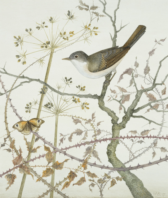 , 'Whitethroat and Meadow Brown,' , Jonathan Cooper