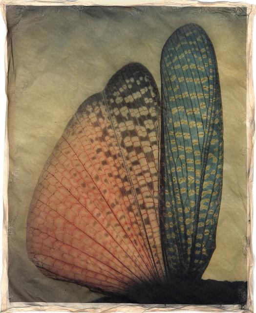 Gregor Törzs, 'à la couleur – Wing Wing 1', 2016, Print, Archival pigment print on Gampi paper, Galerie Commeter / Persiehl & Heine