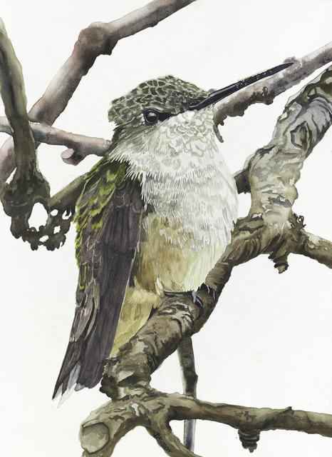 , 'Female Black-throat Hummingbird,' 2018, Wally Workman Gallery
