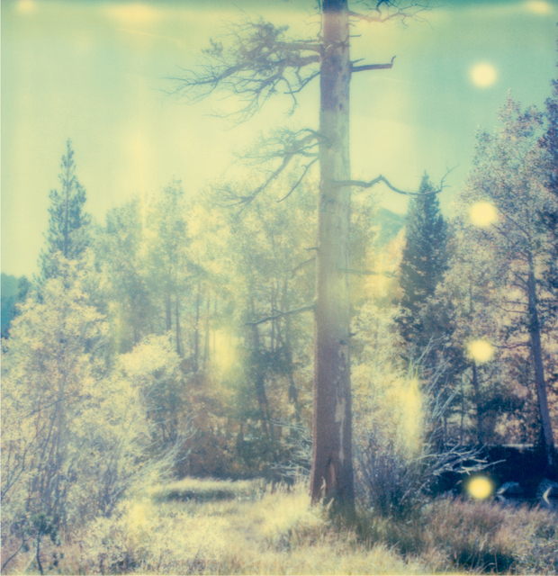 Stefanie Schneider, 'In The Range Of Light I', 2003, Photography, Analog C-Print, hand-printed by the artist, based on a Polaroid, Instantdreams