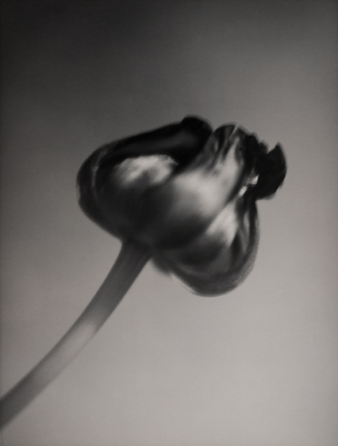 Silke Lauffs, 'Tulip', 2001, Petra Gut Contemporary