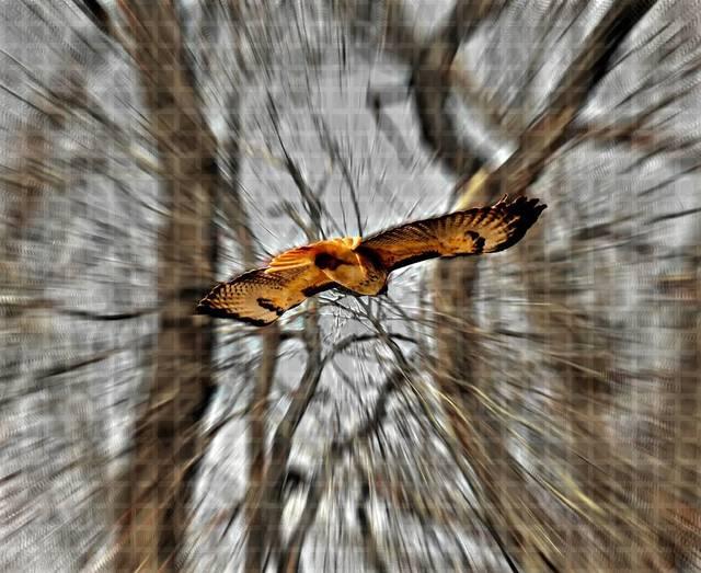 , 'Hawk Eye,' 2015, Agora Gallery
