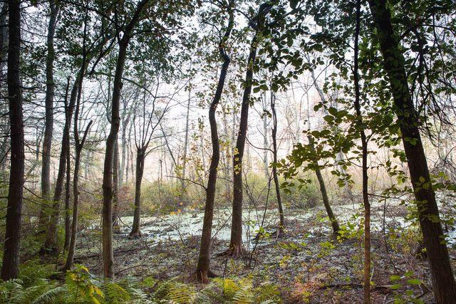 , 'Beaver Swamp, Fall #1,' 2013, 555 Gallery