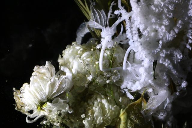 Jorge Rosano Gamboa, 'Still', 2019, Photography, Digital print, Kino Tonala