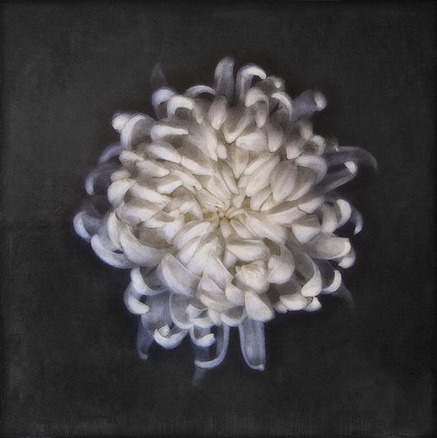, 'White Chrysantheum,' 2017, Bill Lowe Gallery