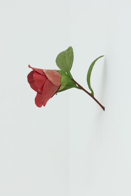 , 'Camellia,' 2016, Galerie René Blouin