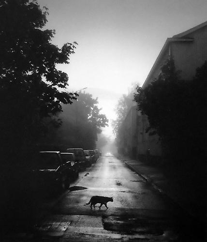 Pentti Sammallahti, 'Helsinki, Finland (Cat Crossing the Street)', 2000, Peter Fetterman Gallery