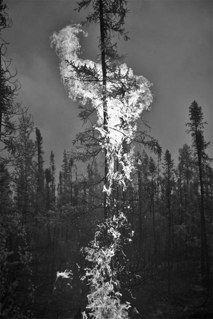 , 'Northwest Infrared #1, 2015,' 2016, Hexton Gallery