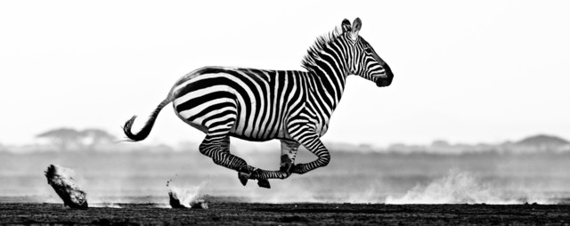 David Yarrow, 'Desert Flight', 2014, Isabella Garrucho Fine Art