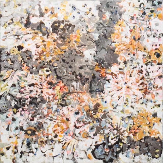 , 'Lichens - Surtsey,' 2017-2018, Gallerí Fold