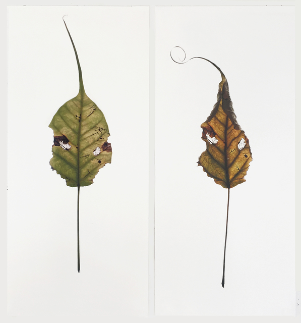 , 'Banyan Leaves (deail),' 2015, A.I.R. Gallery