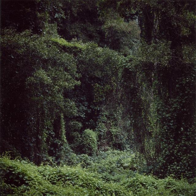 , 'Woodland #56,' 2014, Sies + Höke