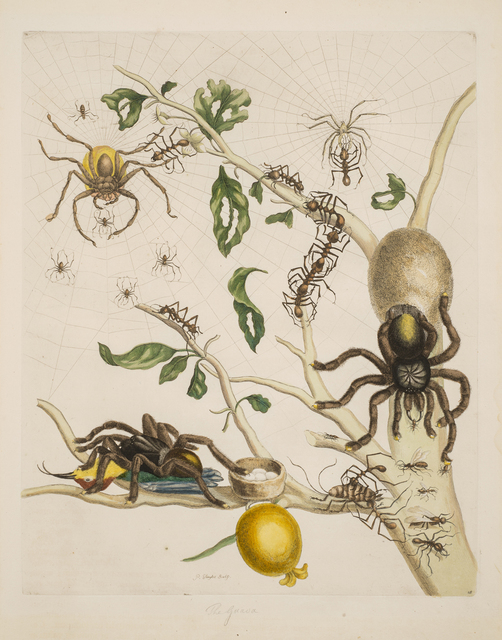 , 'Plate 18 from Dissertation in Insect Generations and Metamorphosis in Surinam,' 1719, National Museum of Women in the Arts