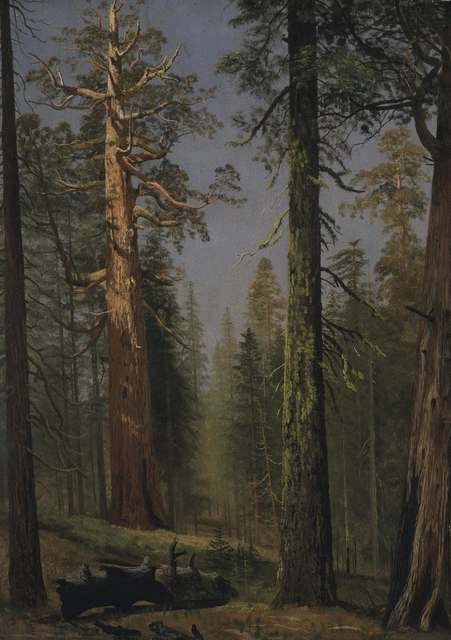Albert Bierstadt, 'The Grizzly Giant Sequoia, Mariposa Grove, California', ca. 1872-1873, Los Angeles County Museum of Art